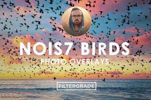 1 Nois7 Birds Photo Overlays - FilterGrade