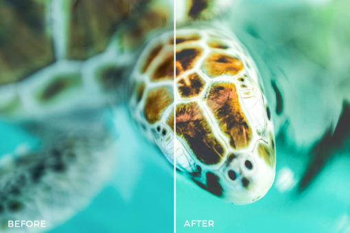 9-Nick-Asphodel-Film-Travel-Lightroom-Presets-FilterGrade