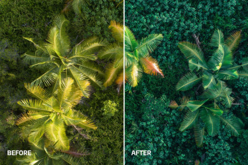 tropical rain forest and jungle presets
