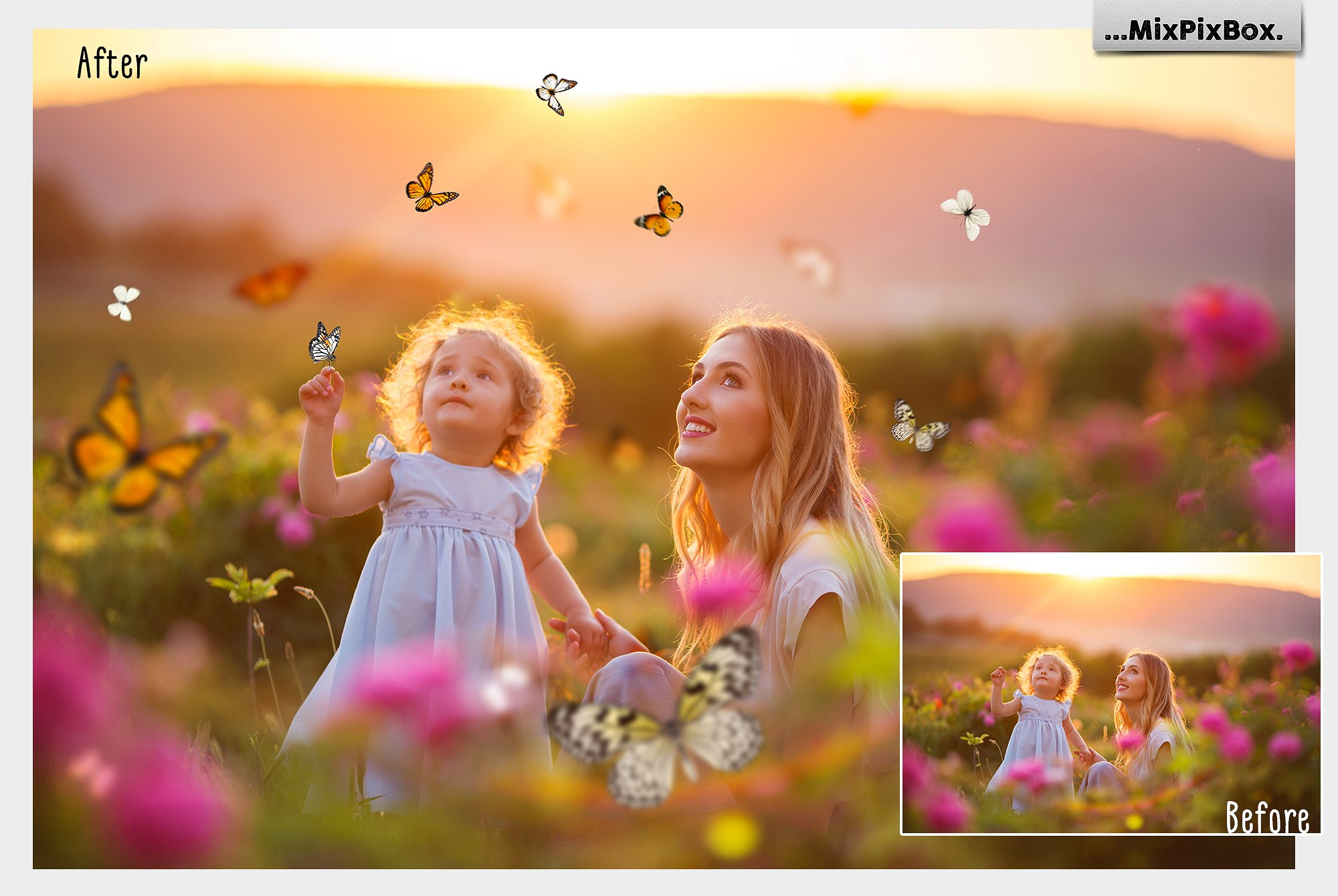 butterfly photography overlays