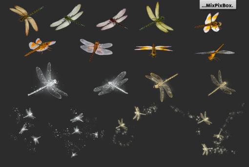 transparent png dragonfly overlays