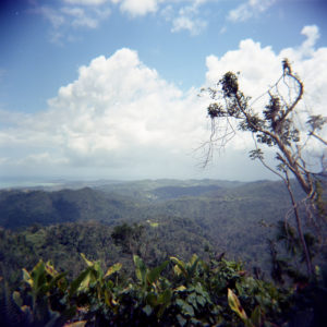 2 Holga 120N Sample - FilterGrade