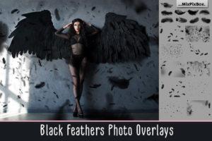 Black Feathers Photo Overlays