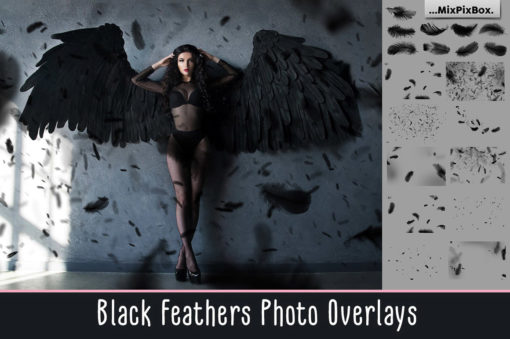 Black Feathers Photo Overlays