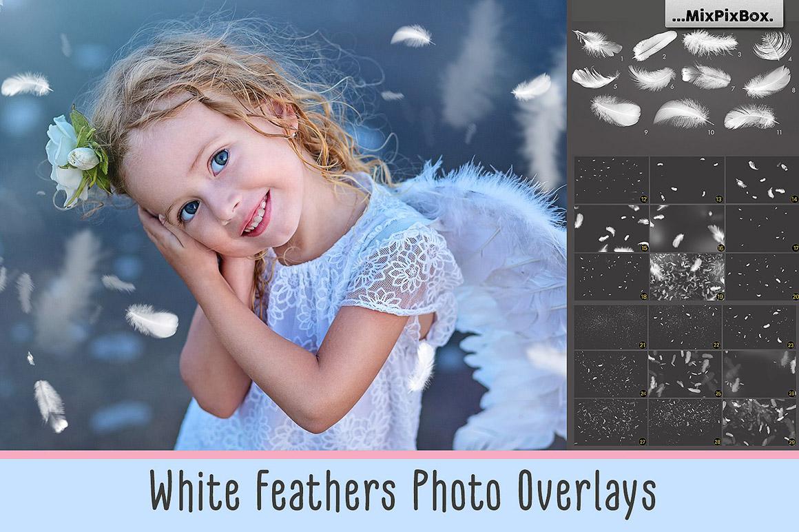 White Feathers Photo Overlays