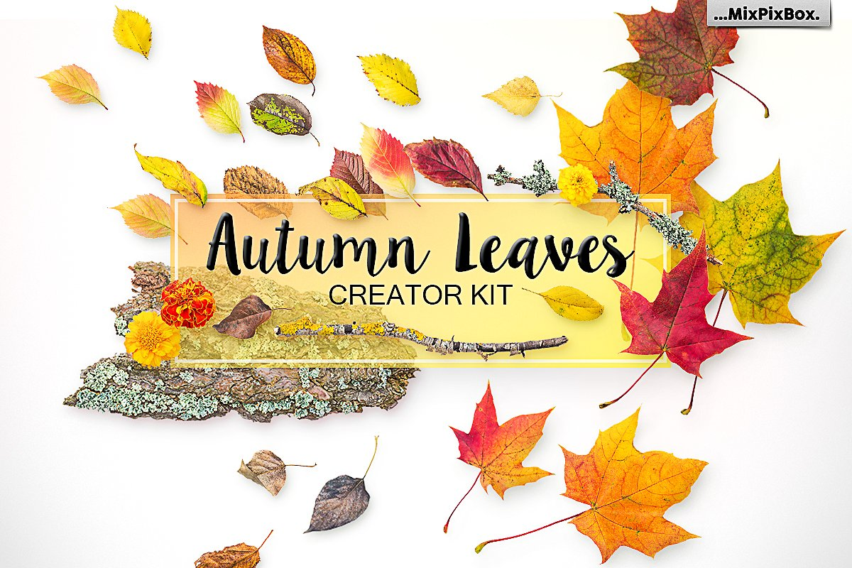 Autumn Leaves PNG Elements and Scenes