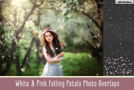 White and Pink Petals Photo Overlays