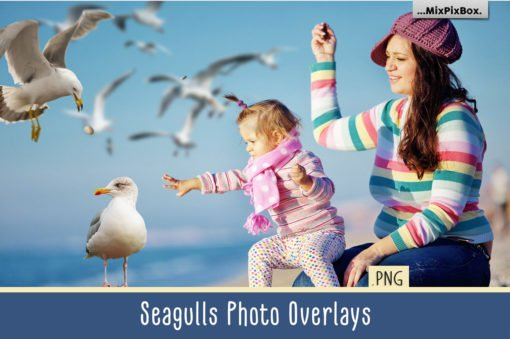 Seagulls PNG Photo Overlays