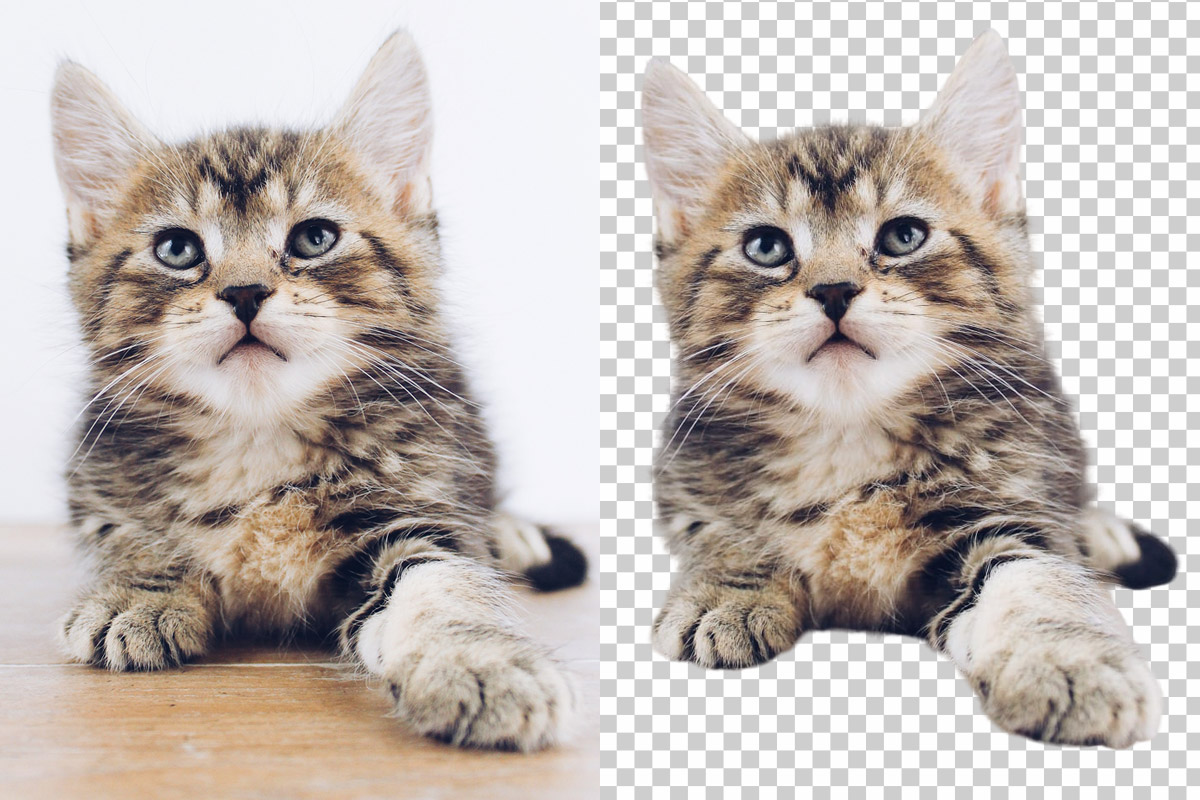 background image remover trace