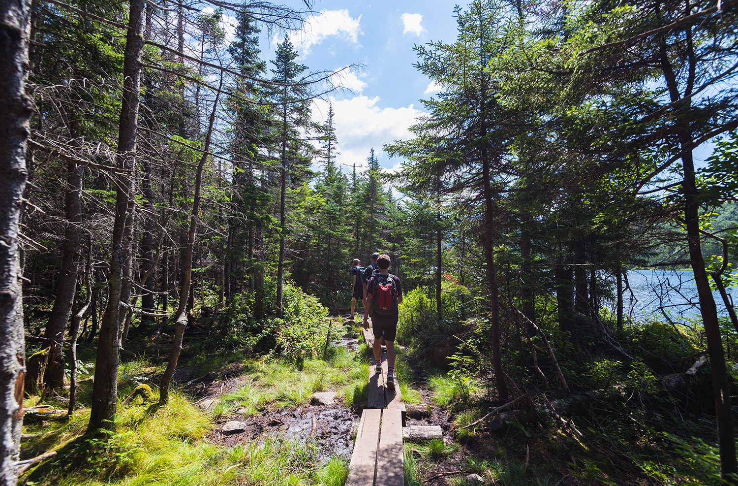 thick forest hike in New Hampshire, white mountains