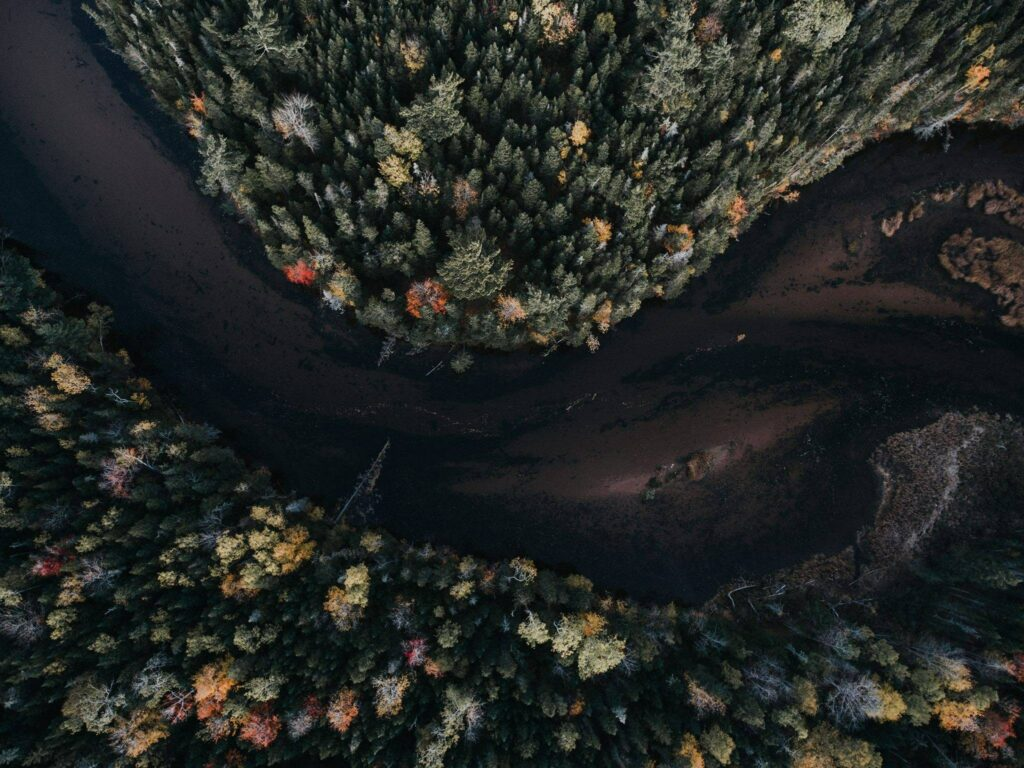 trees by river aerial image
