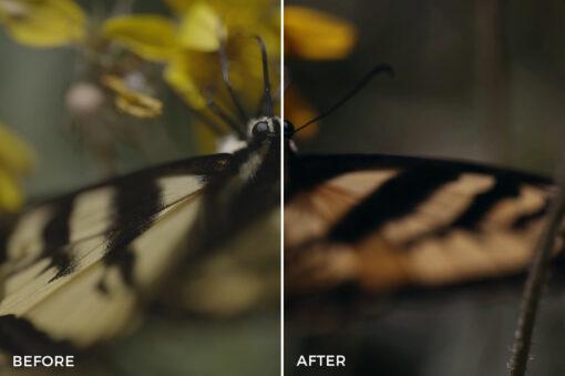 6 Kal Visuals Nature LUTs Bundle - FilterGrade