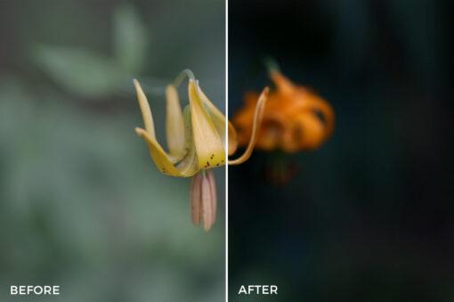 11Kal Visuals Nature LUTs Bundle - FilterGrade
