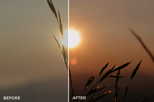 13 Kal Visuals Nature LUTs Bundle - FilterGrade